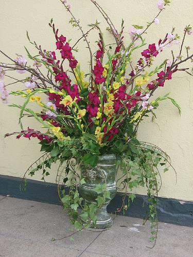 August Birth Month Flower: Gladiolus