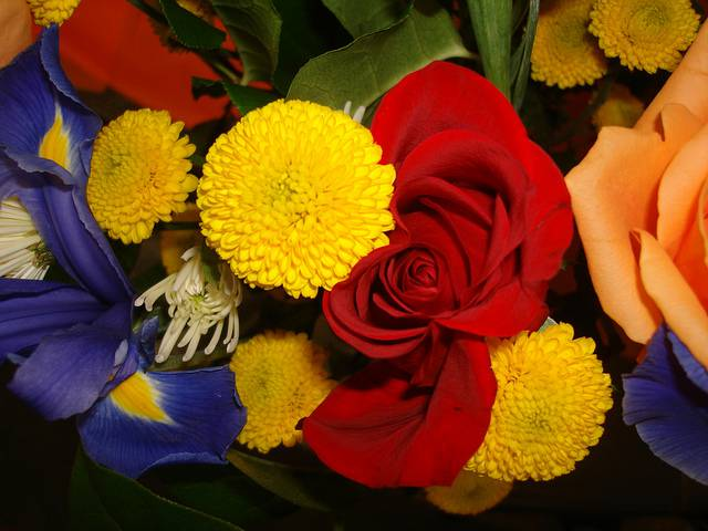 7 Great Flowers to Give Your Graduate | Avas Flowers