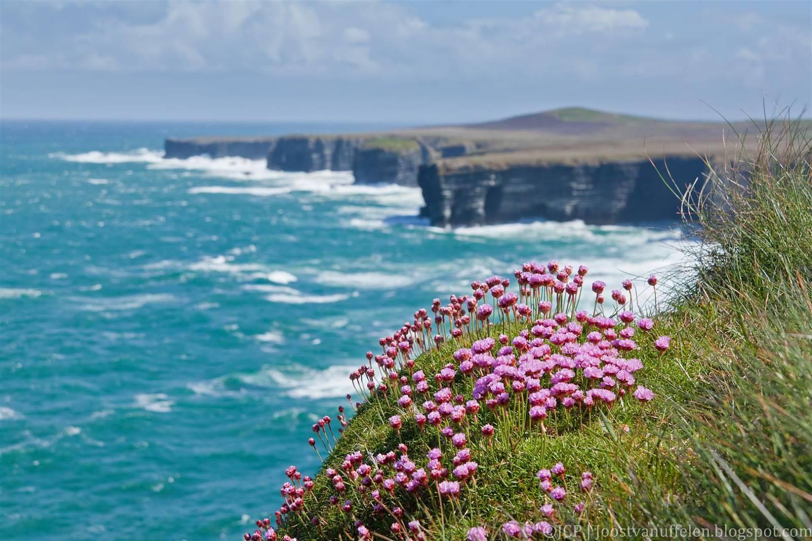 Native Plants Of Ireland Avas Flowers