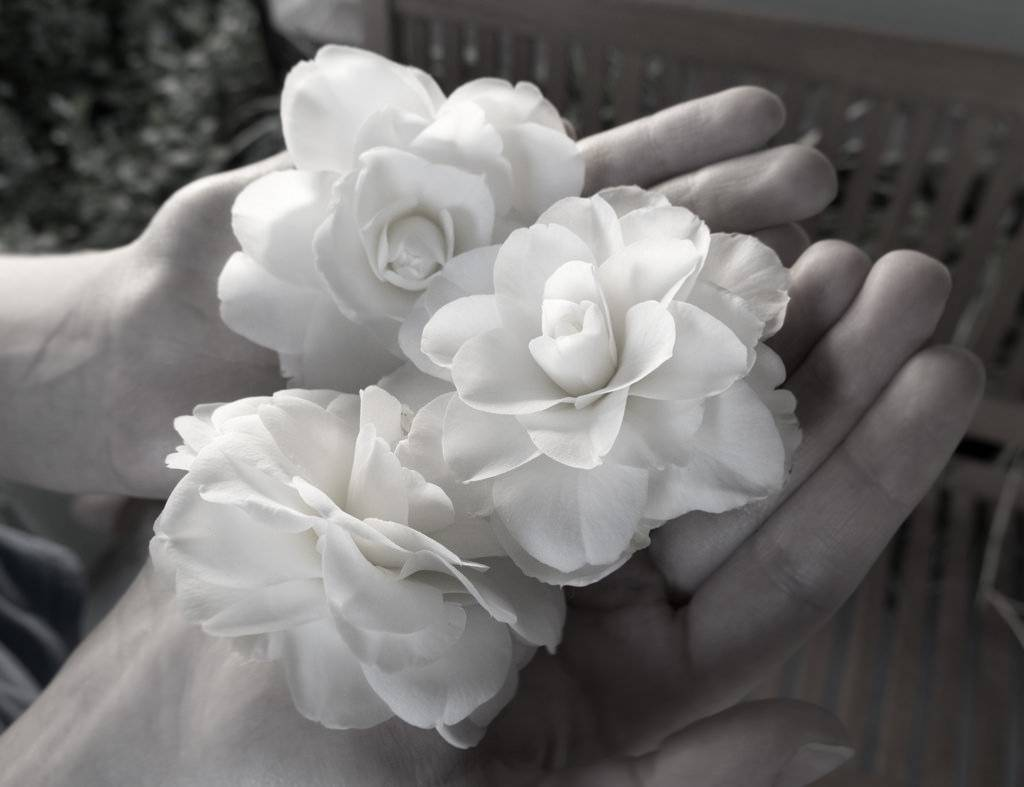 Every Flower Is A Gift But What Is The Meaning Behind It Avas