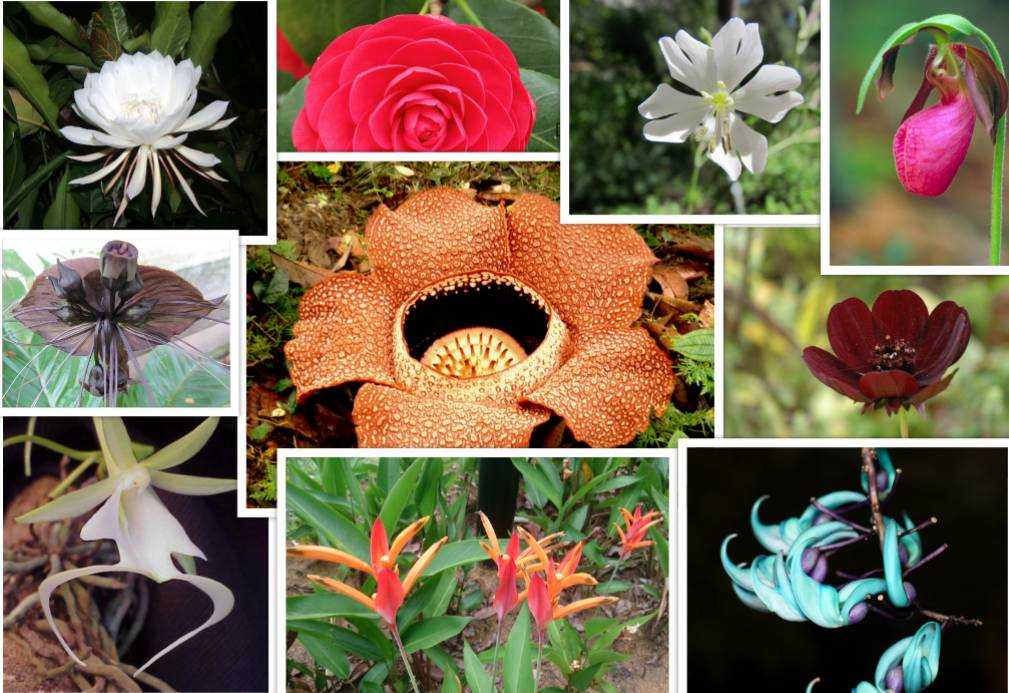 endangered flowers that will leave the world a little less