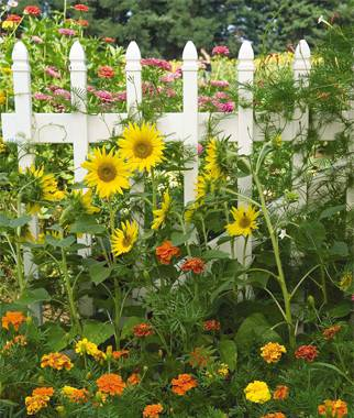Its Not Too Late To Start A Summer Garden Avas Flowers