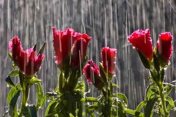 Do April Showers Really Bring May Flowers Avas Flowers