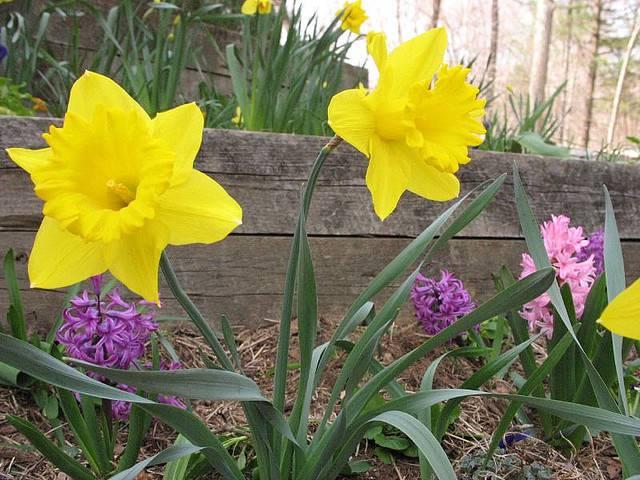 6 Popular Flowers For Easter Avas Flowers