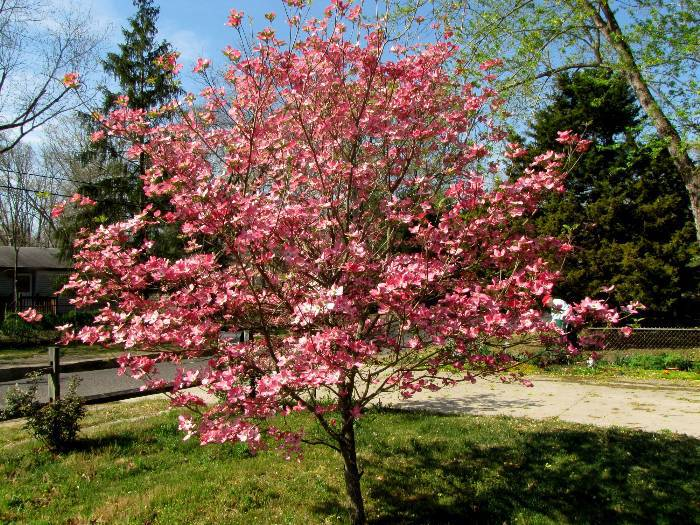 The Plants And Flowers Of The Easter Season Avas Flowers